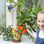 Какие цветы поставить в детской комнате